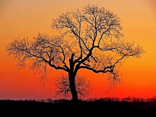 sun nature sunrise bedford dawn horizon scenic bedfordshire naturereserve vista felton lumen wildlifetrust greensandridge robertfelton greensandridgewalk oldwardentunnel oldwardentunnelnaturereserve wildlifetrustforbedfordshirecambridgeshireandnorthamptonshire