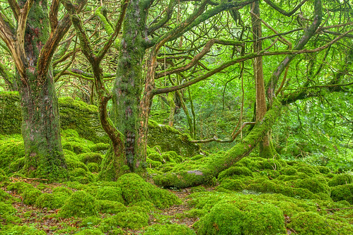 Emerald Forest - Killarney National Park | by Bold Frontiers