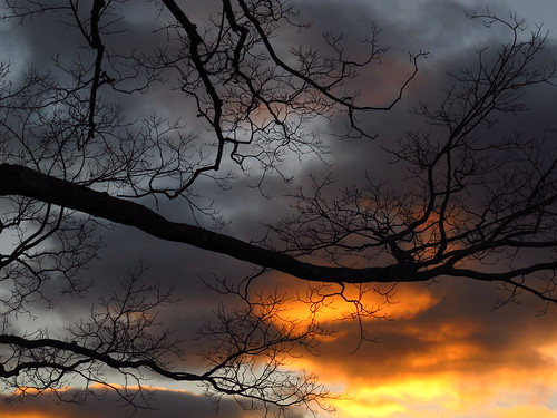 flickr12days nature greatnature sky nightsky sunsets sunsetshot sunset silhouettes trees newengland naturemacro slicesoftime ngc