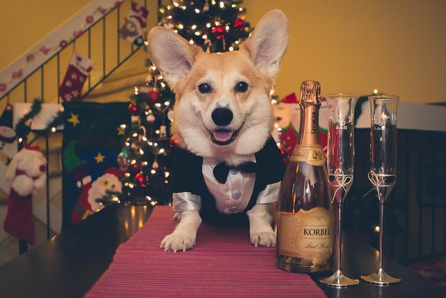 365/365 - 31 December 2013: Cheers!