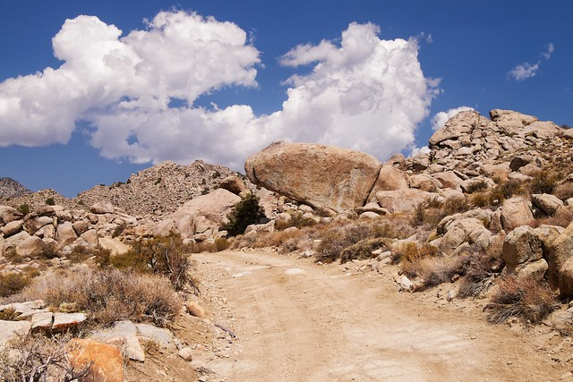 Inyo National Forest, White Mountains, Wyman Creek Road