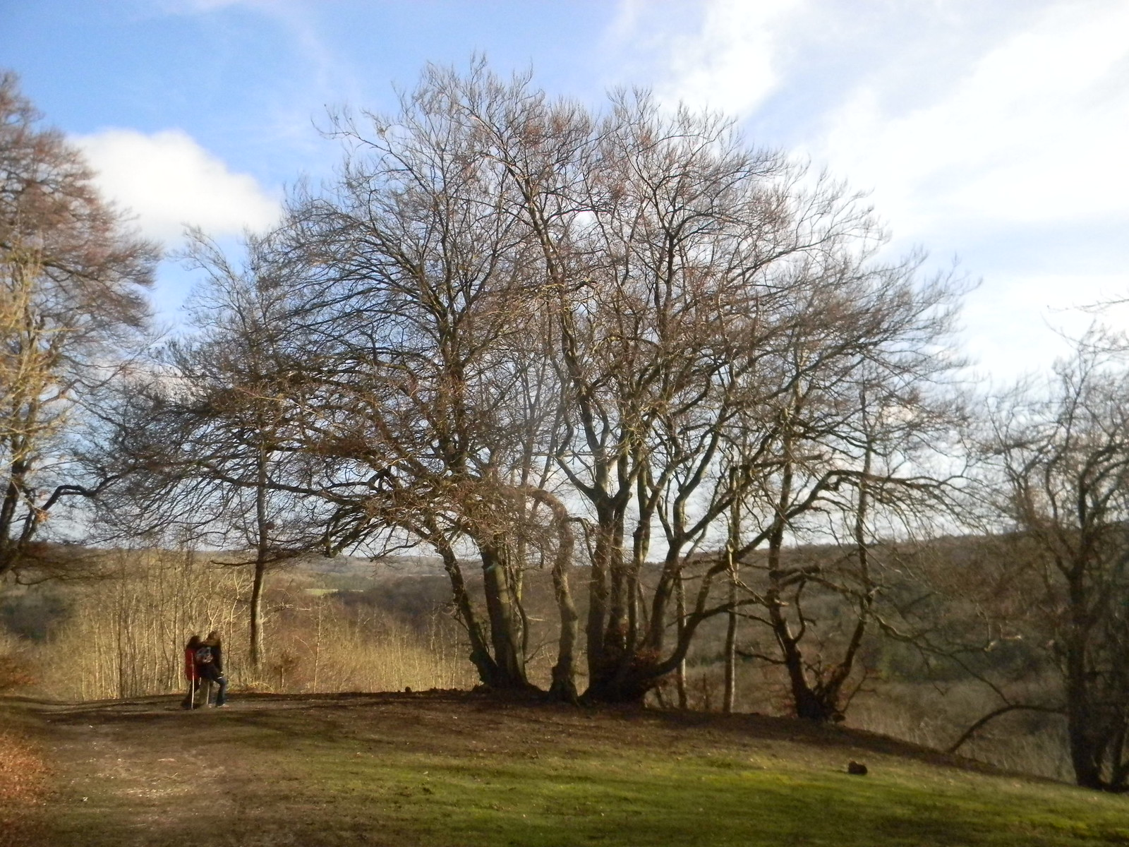 Big Trees Princes Risborough to Wendover