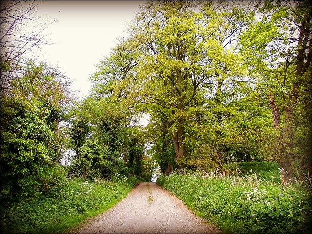 Country Lane .