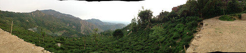 panorama india tea hills darjeeling makaibari