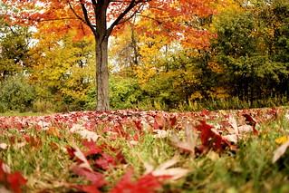 Bellevue State Park | by Phil Roeder