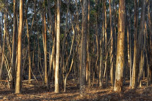 australia melbourne greenvale sugargums woodlandshistoricpark