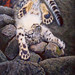 Snow leopard cub   tired, fell asleep by irishishka
