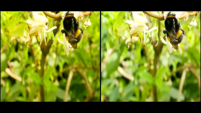 Bumble Bee - 3d movie clip - parallel view