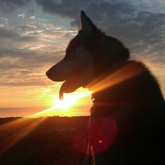 Our late bro Benson. He would have been 6 today. Run free crazy huskerboo! X