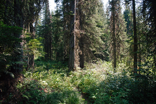 Lincoln Lake Trail   by epiøne