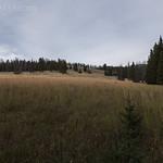 Meadows along Dailey Creek