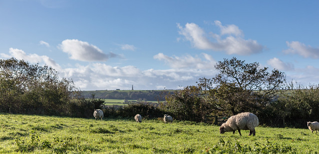 Rural Panorama - Bembridge