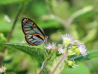 Butterfly 02 | by juliangreen21