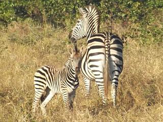 Malilalangwe Natural Reserve | by Ricardo Pracana