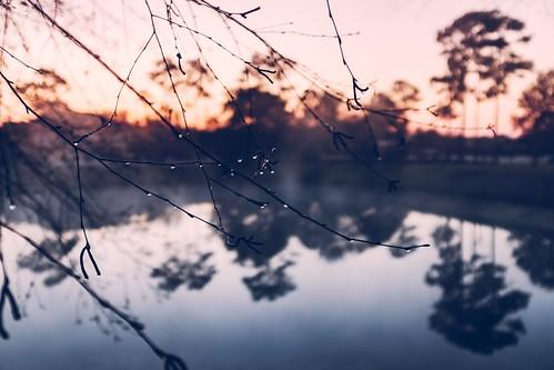 Morning Dew   by Will Hucks