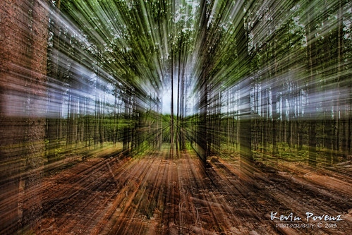 longexposure blue trees light brown color forest cool woods focus kevin midday gree 2013 povenz