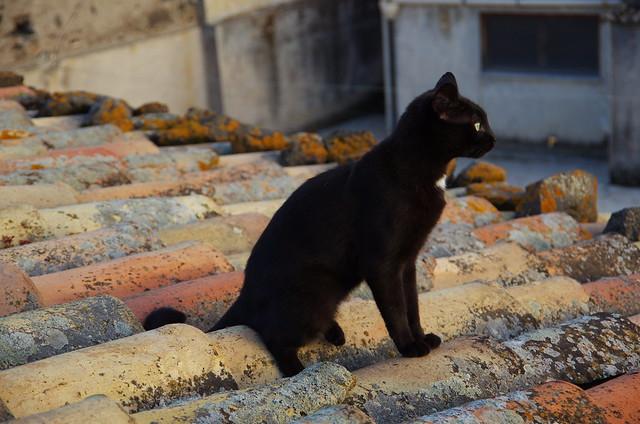 Neruda, gatto e poeta siciliano