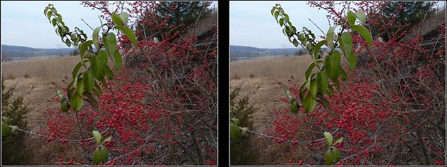 Peace Valley Berries 3D Crosseye