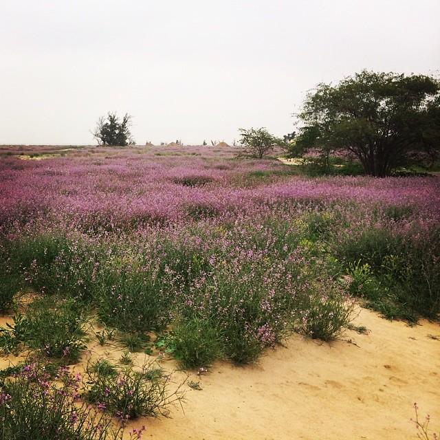 Naturally Kuwait