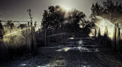 morning mist canada water leaves sunrise droplets leaf movement nikon farm niagara spray hose east master greenhouse sprinkler lincoln splash hdr goldenhour ribbet lensflares photomatix beamsville tonemapping nikkor1855mm agricolo agricoltore d5100 paulboudreauphotography nikond5100