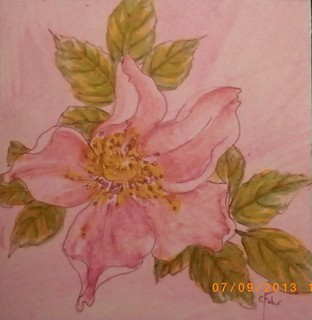 alberta rose art 6