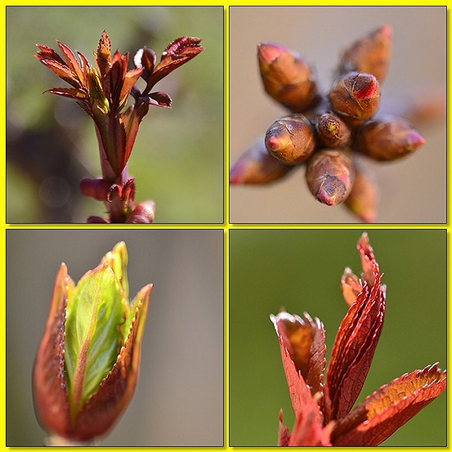Accenni di primavera