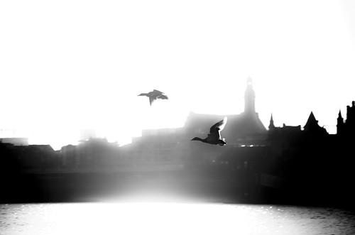 city blackandwhite bw birds sunrise river belgium pentax highcontrast ducks antwerp schelde vignette k5