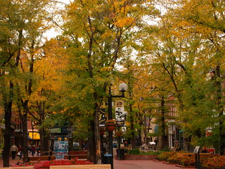 Pearl St. Mall Trees | by Amy Aletheia Cahill