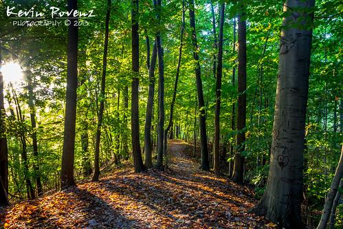 sun green leaves sunshine canon woods october walk michigan ottawa trail westmichigan jenison 2013 grandriverpark canon60d kevinpovenz ottawacountyparks