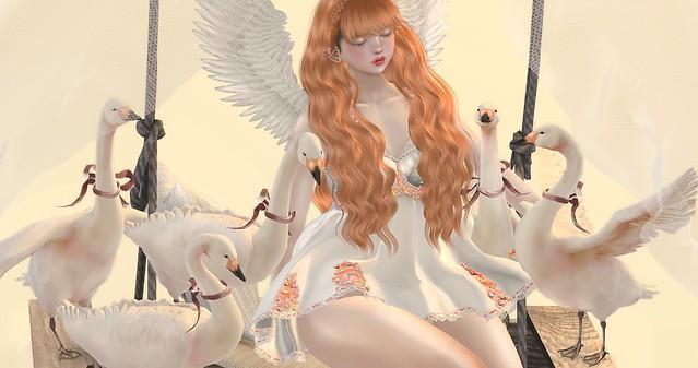❀ swan's angel ❀」