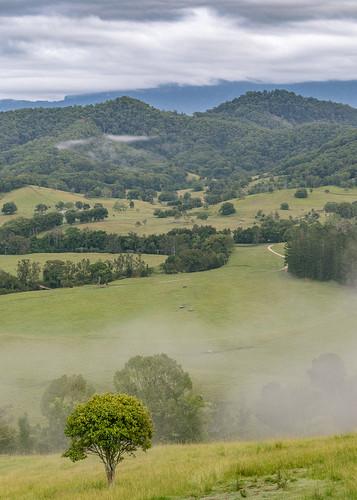 australia murwillumbah nsw tweedvalley morning mist cloud fog farmland rural trees