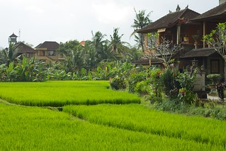 Bali 016 - Ubud - rice fields amidst the town | by mckaysavage