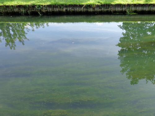 New River, Hornsey   by diamond geezer
