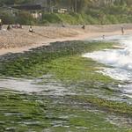Sea weed beach, Oahu