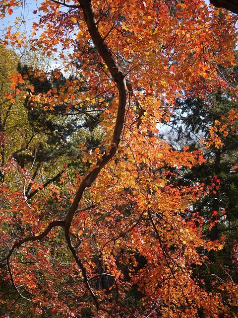 日, 2013-11-10 12:02 - Central Park