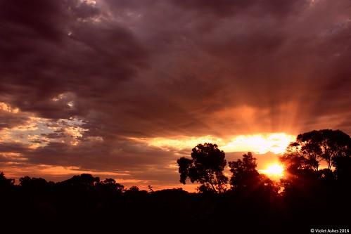 sunset sky sun sunshine silhouette canon photography sunsets australia southaustralia gawler sunsetphotography canoneos450d sunsetaday