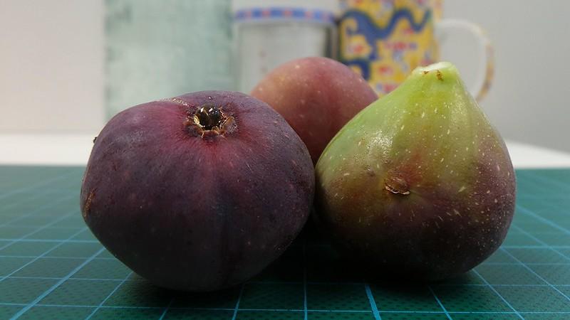 Garden Figs ~ Explore #77