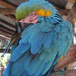 Di, 14.07.15 - 13:44 - Zoologico de Cuenca