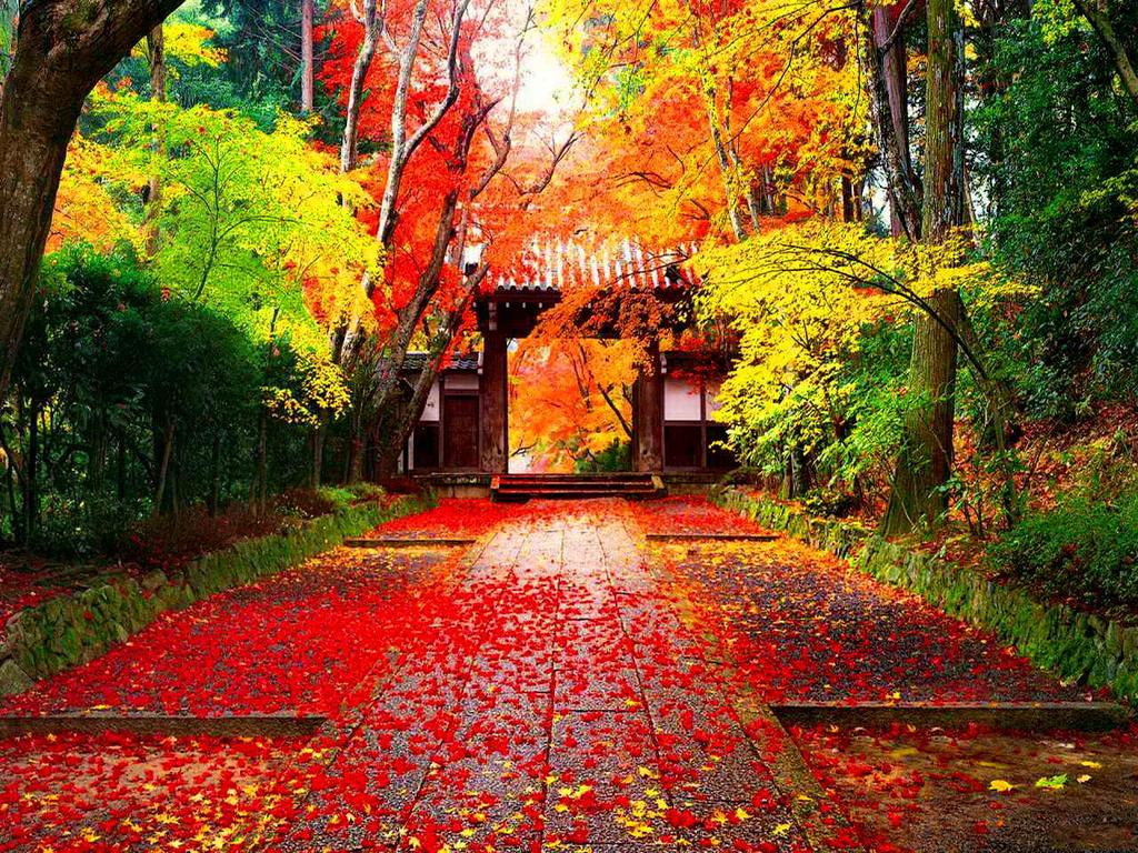 Kết quả hình ảnh cho Ba điểm 'ngắm lá vàng rơi' tuyệt đẹp châu Á