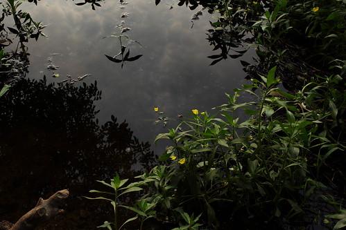 park flower reflection nature water yellow oregon canon landscape salem om slough zuiko minto mintobrownislandpark gzuiko28mmf35 t1i