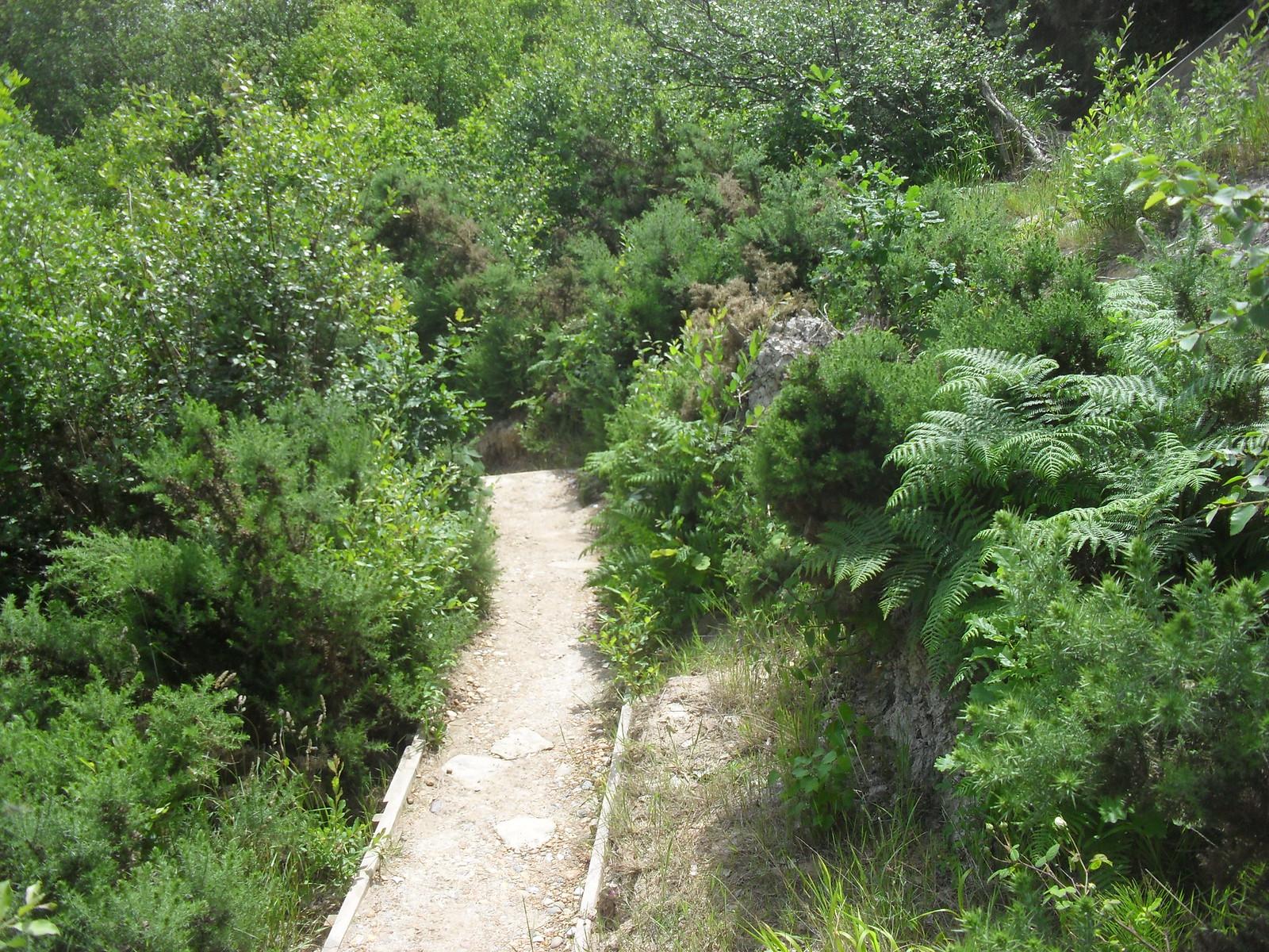 SDC11558 Path down to Fairlight Glen's beach