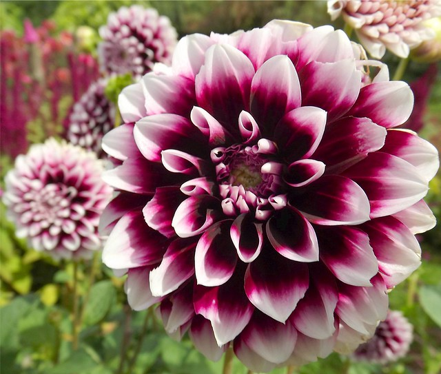Two Toned Flower