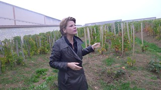 Guide Bollinger | by university of gastronomy