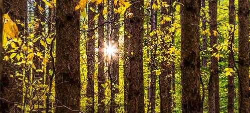 sunrise unitedstates michigan springlake hoffmaster fall2013