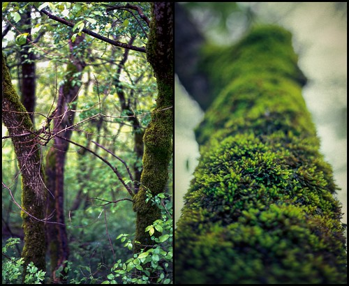 Supergreen diptych | by HolmisticWalker