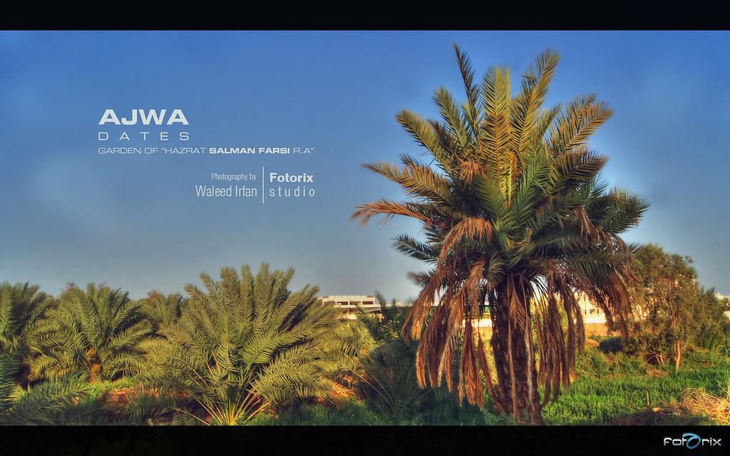 Ajwa Garden of Hazrat Salman Farsi R A | Location: Madina, S… | Flickr