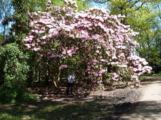 RHS Garden Harlow Carr Harrogate Yorkshire
