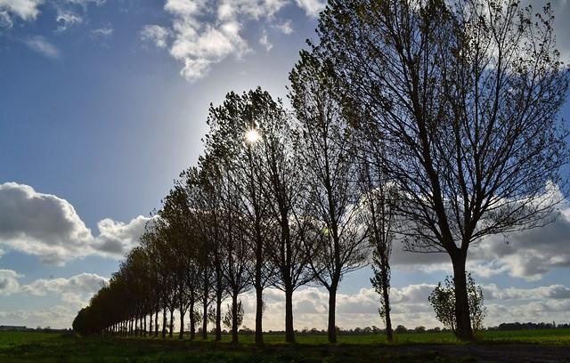 Market Overton Trees