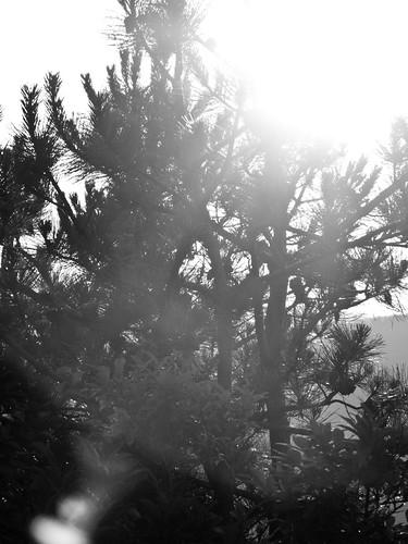 sunset blackandwhite mountains pine northcarolina backlit montreat