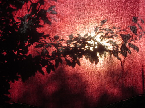 cambridge red sun tree silhouette garden cherry evening branch shawl cambridgeshire hinton cambs